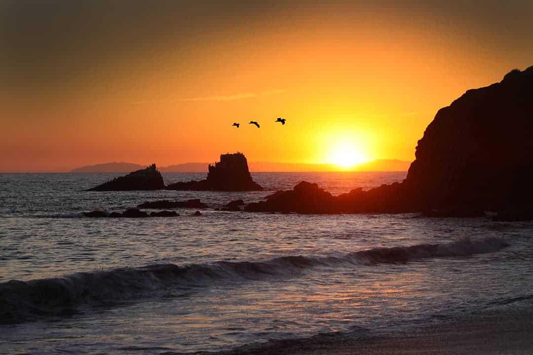 Laguna Beach sunset with pelicans by martinsullivandesign.com
