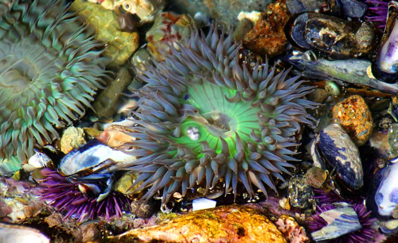Colorful Tide Pool Water Show by martinsullivandesign.com