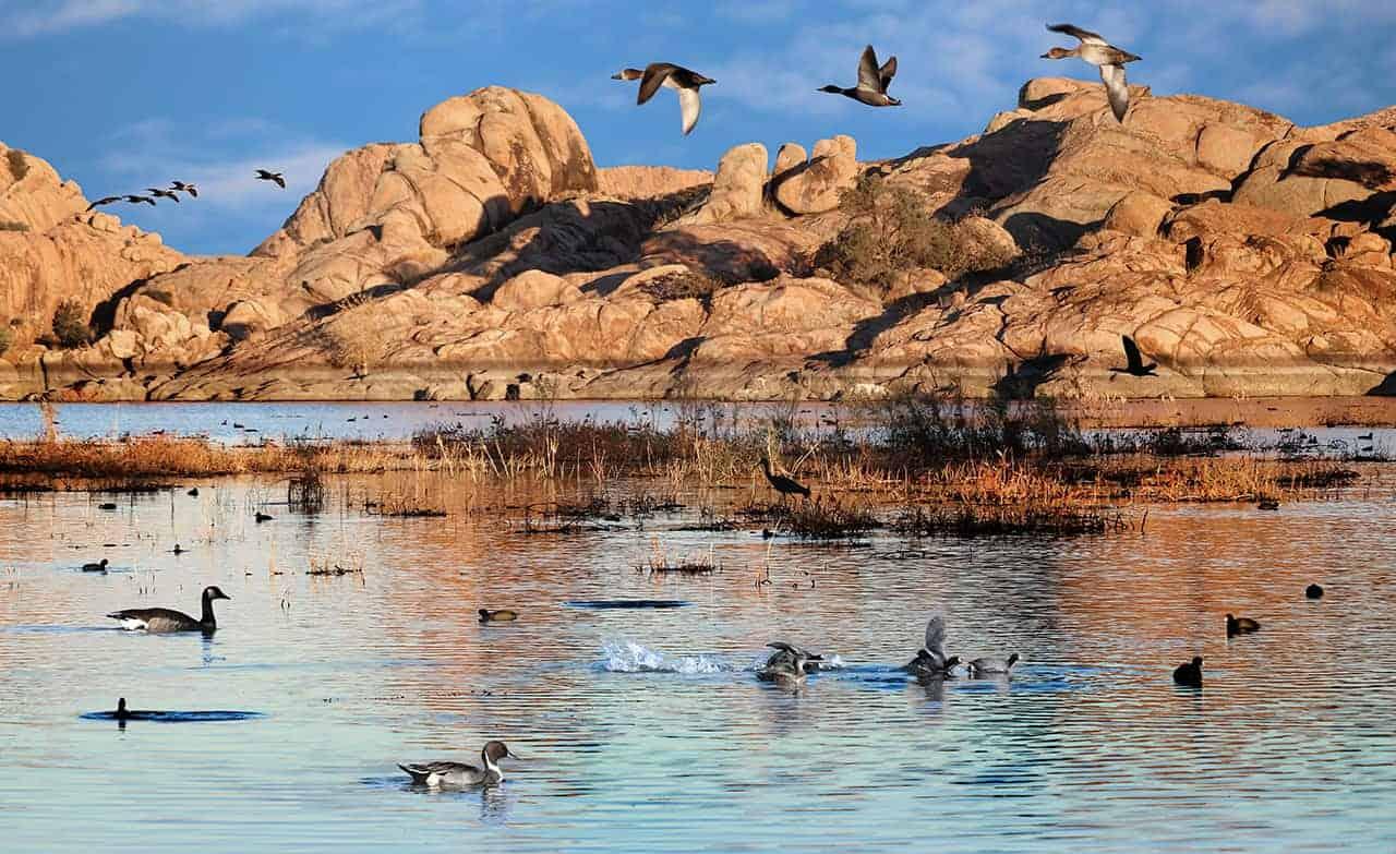 Willow Lake Wildlife Composition by martinsullivandesign.com