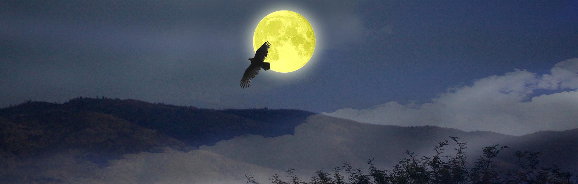 1x3W-Hawk-Moon