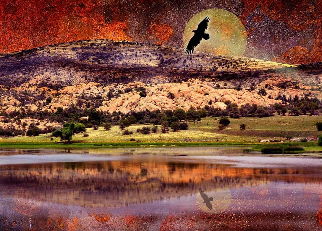 Eagles Freedon