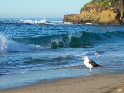Scenic-CA-Coastline-100_0950
