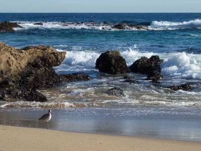 Scenic-CA-Coastline_0883