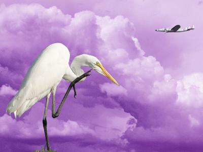 Clouds-Dramatic-Egret-Plane-9481-W