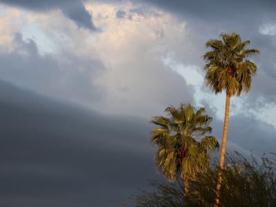 Clouds_Dramatic_Palms-3247-W