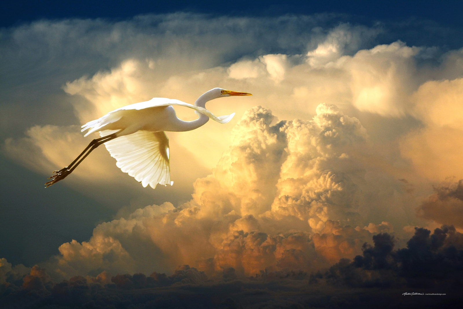 Egret-and-Big-Clouds-W