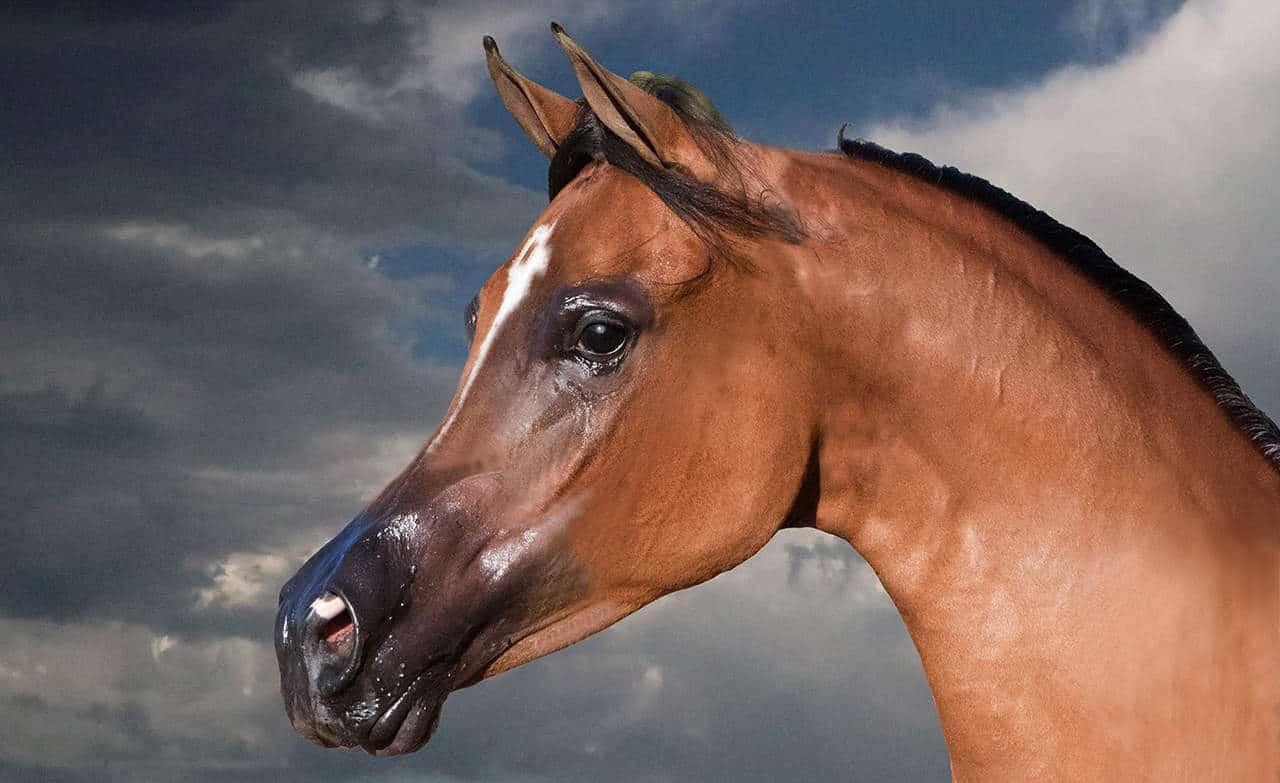 The Glorious Arabian by martinsullivandesign.com
