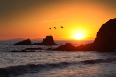 Flight of the Sunset Pelicans, Laguna Beach, California