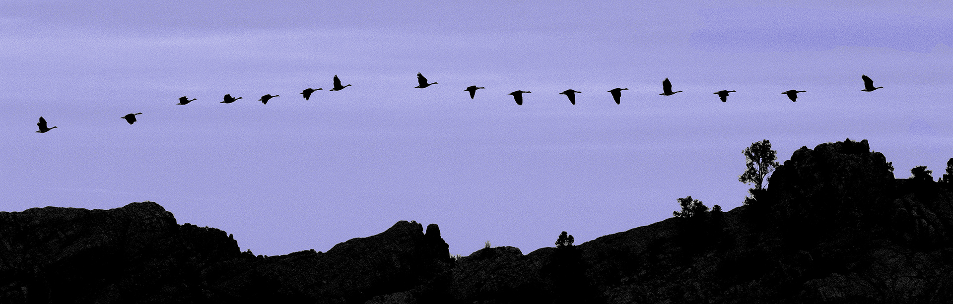 1x3W-Geese_9209