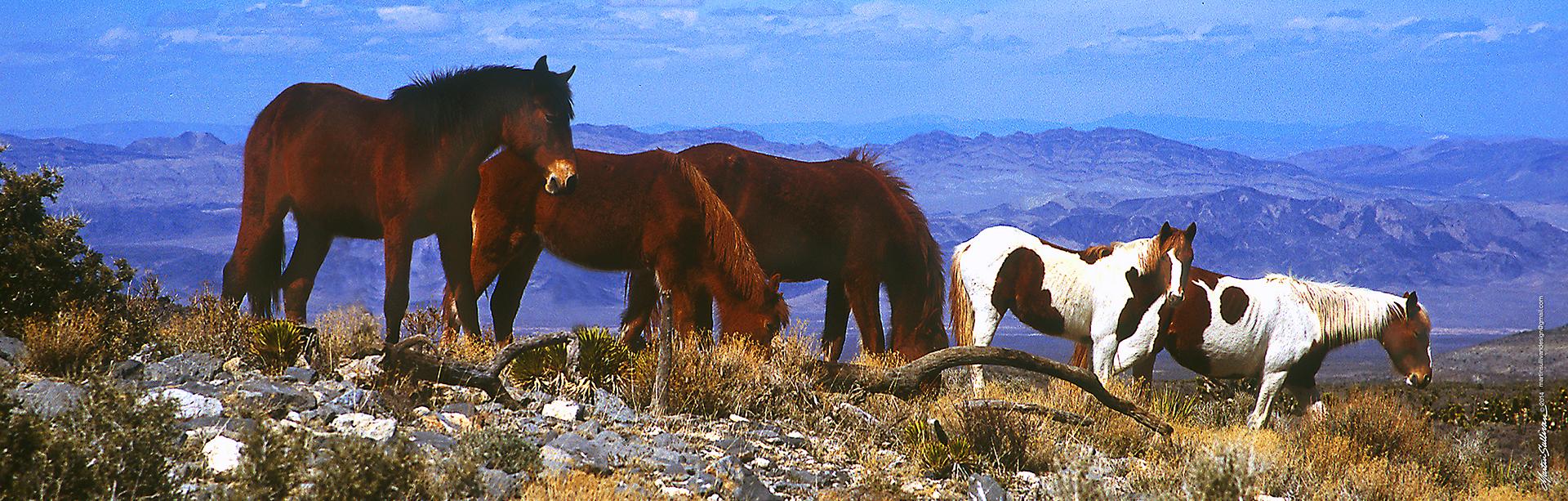 1x3W-Horses-C.C