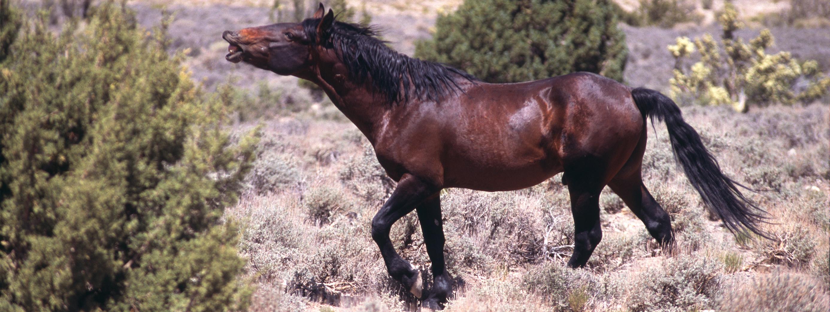 Horse-02-12-0023-m-1x3-W