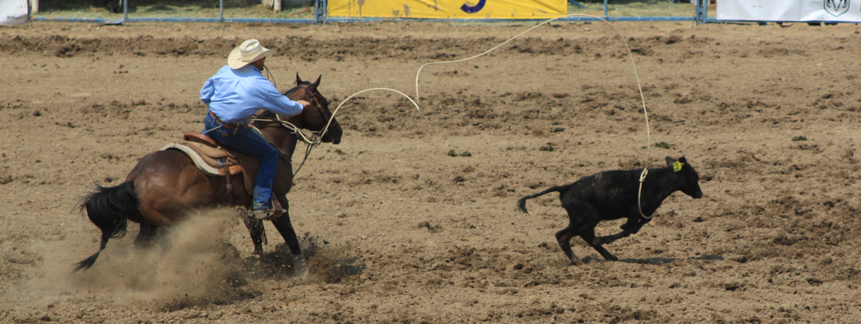Rodeo_3389